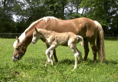 Hayat Sigortası İle Atlar Koruma Altında