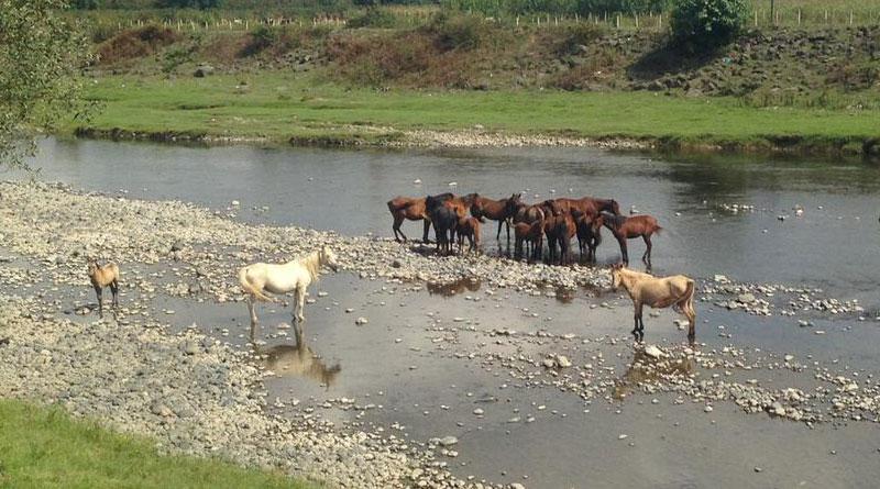 Atlara Özgürlük!..